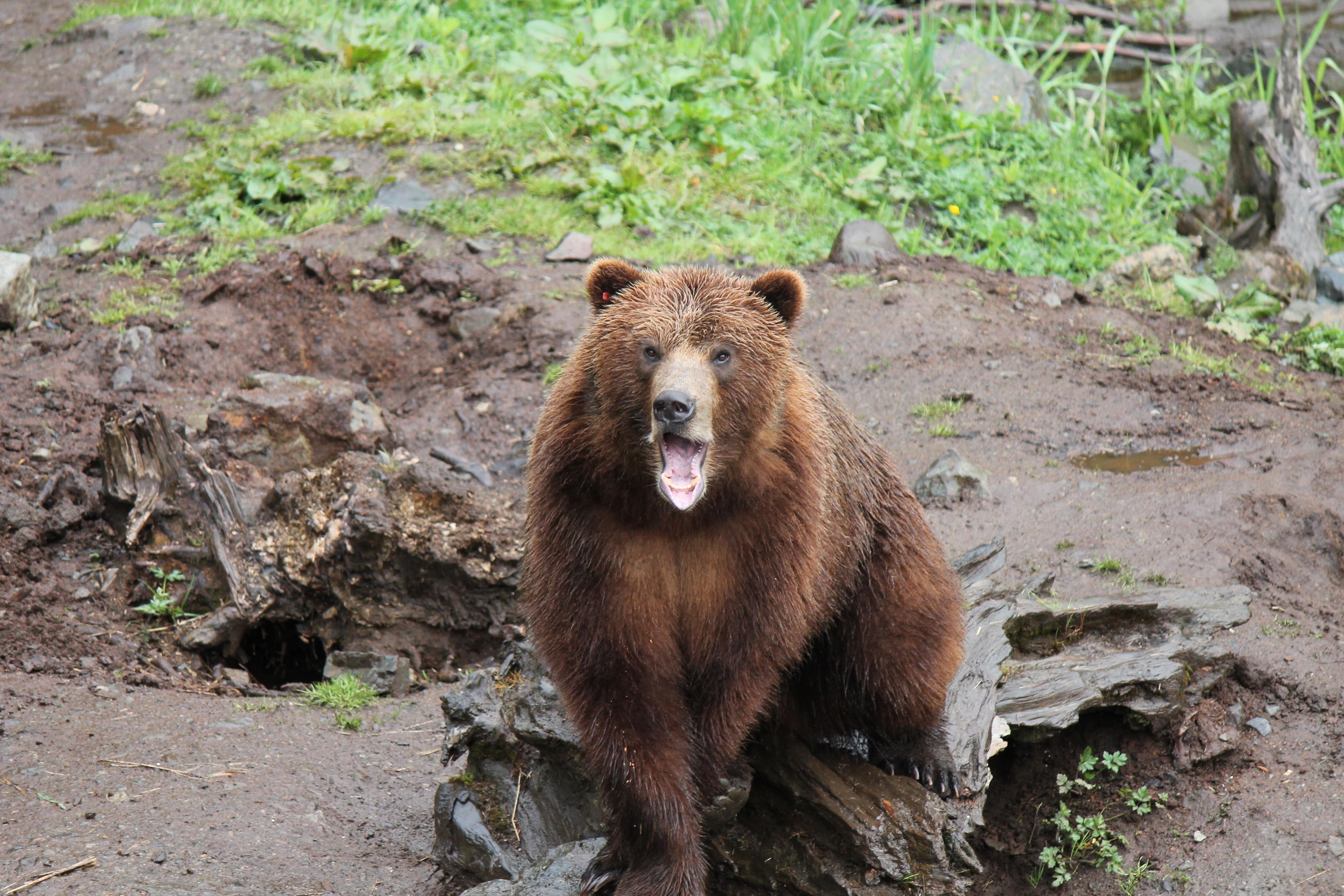 Alaskan animals–Add your own caption | Beth Warstadt