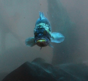 Fish cropped