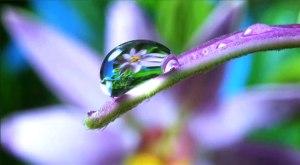 Louie Schwartzberg water drop