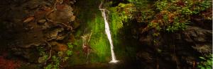 Louie Schwartzberg water fall